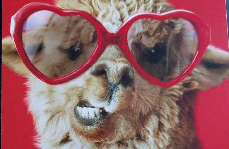 Llama wearing red heart-shaped glasses on a red background